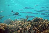 The Reef in Puerto Morelos is a National Park and great for Snorkeling and Diving